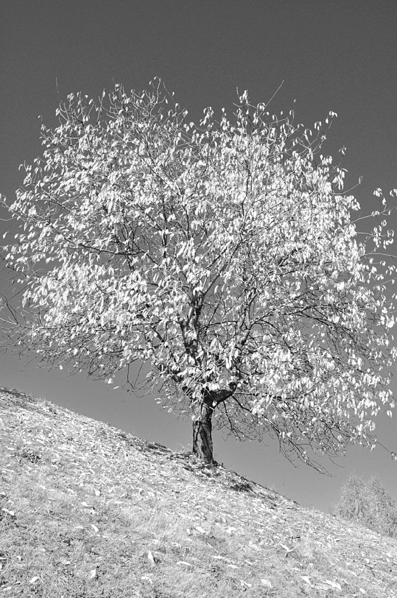 Photograph White tree by Mihaela Floriana Soare on 500px