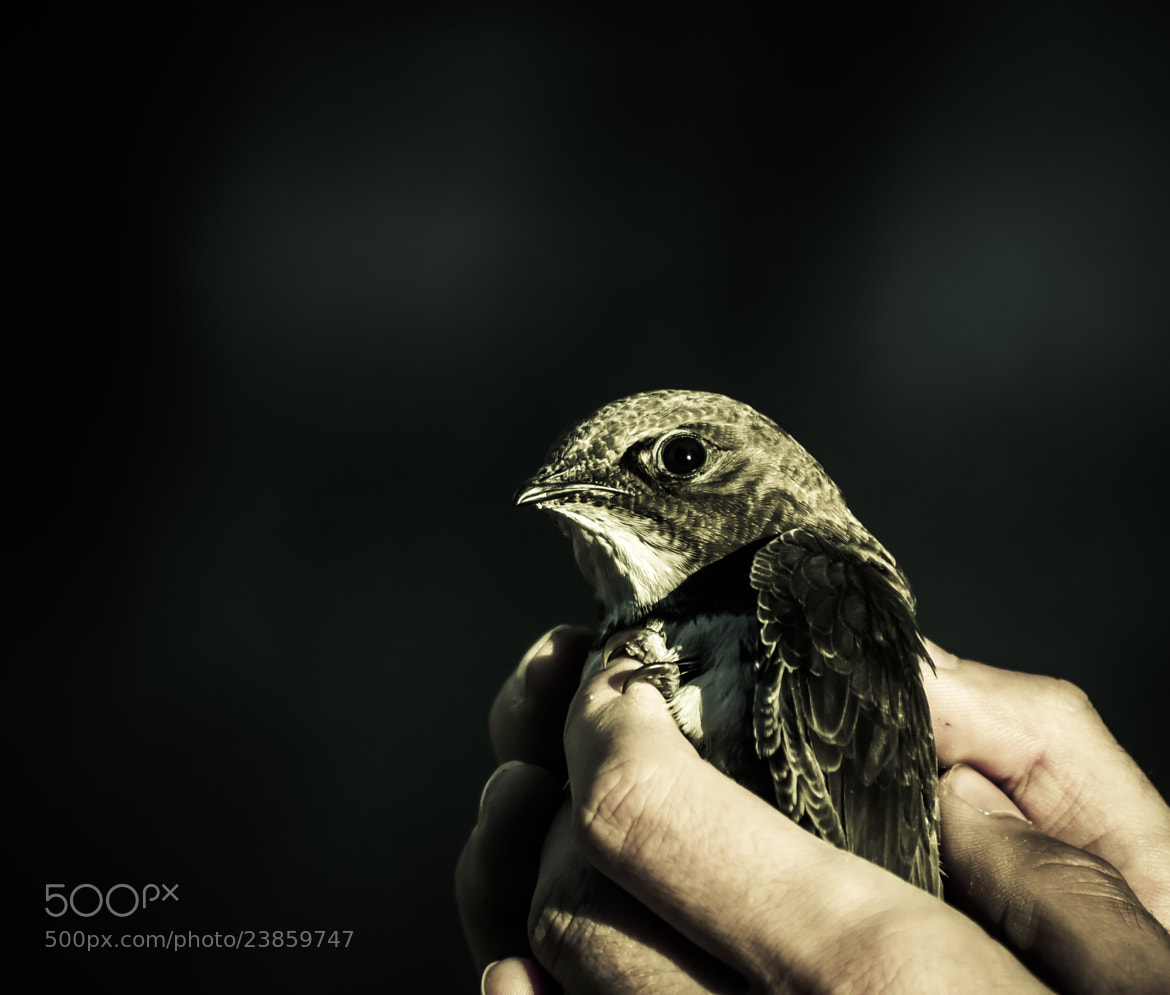 Photograph swift  by Kazımcan Malkoç on 500px