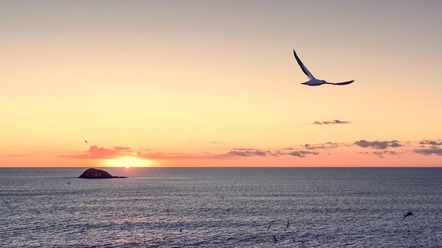 Muriwai beach, автор — Ronnie Li на 500px.com