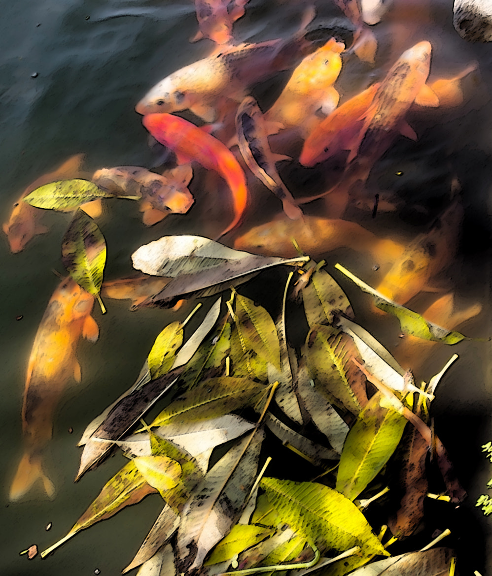 Photograph koi by Leo Lee on 500px