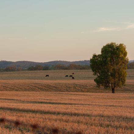 Australian Fields