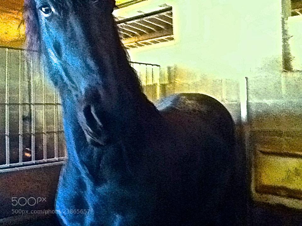 Photograph Nimar: Little white? - Me: Big Black? by Jordi Killswitch Diamond on 500px