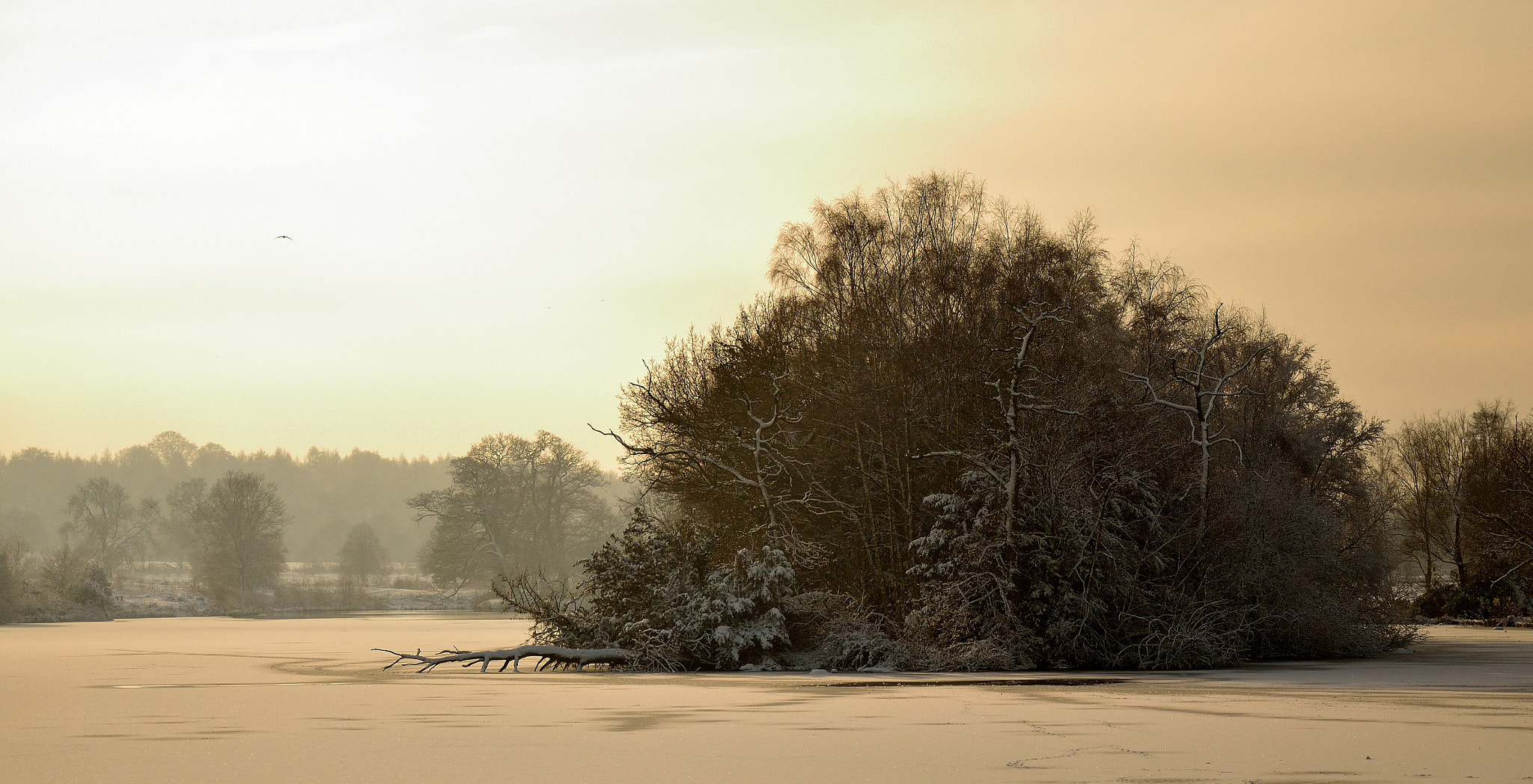 Photograph Clumber Park Frozen Lake by Steven Hindon on 500px