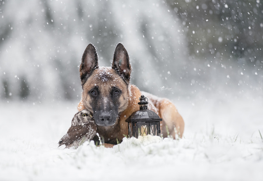 The very first snow, автор — Tanja Brandt на 500px.com