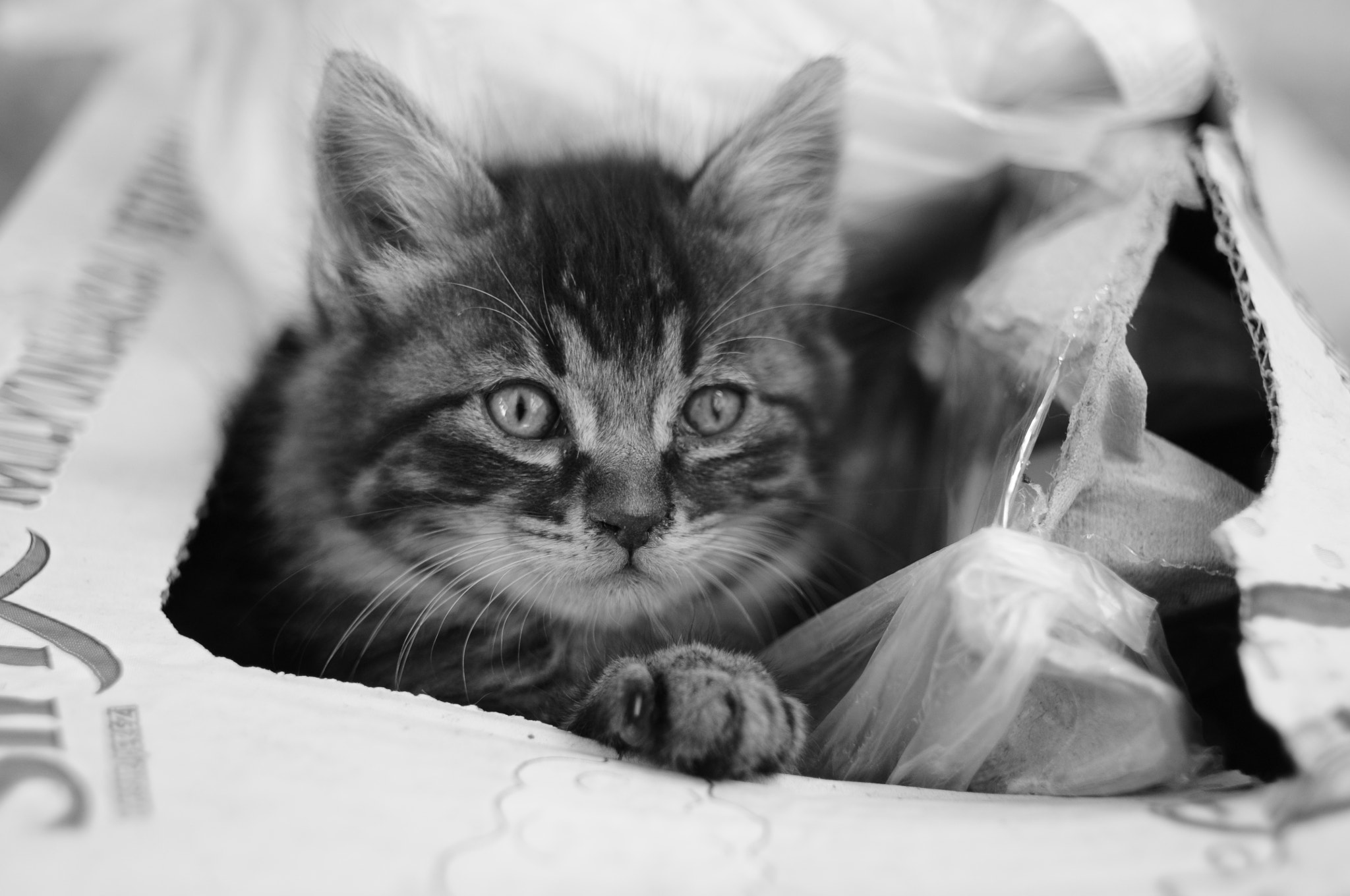 Photograph Cat in the box. by Ahmet Fatih Gülcan on 500px