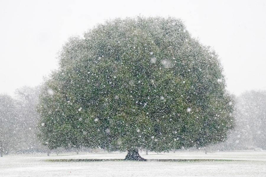 First snow in Greenwich Park