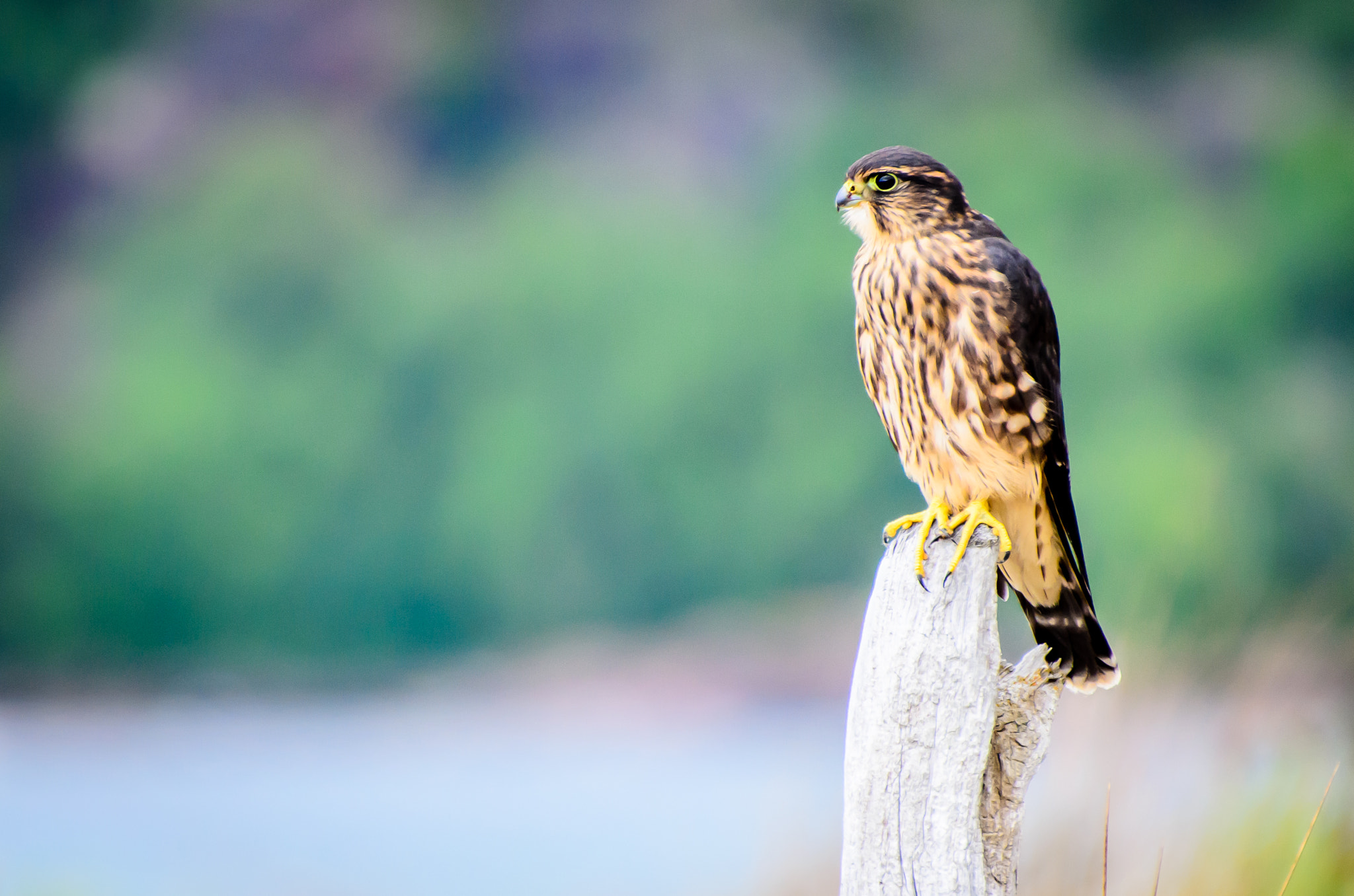 Photograph Merlin by Laurens Kaldeway on 500px