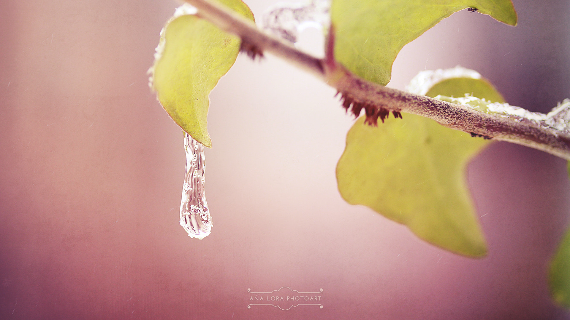Photograph Ice Drop by Ana Lora Photoart on 500px