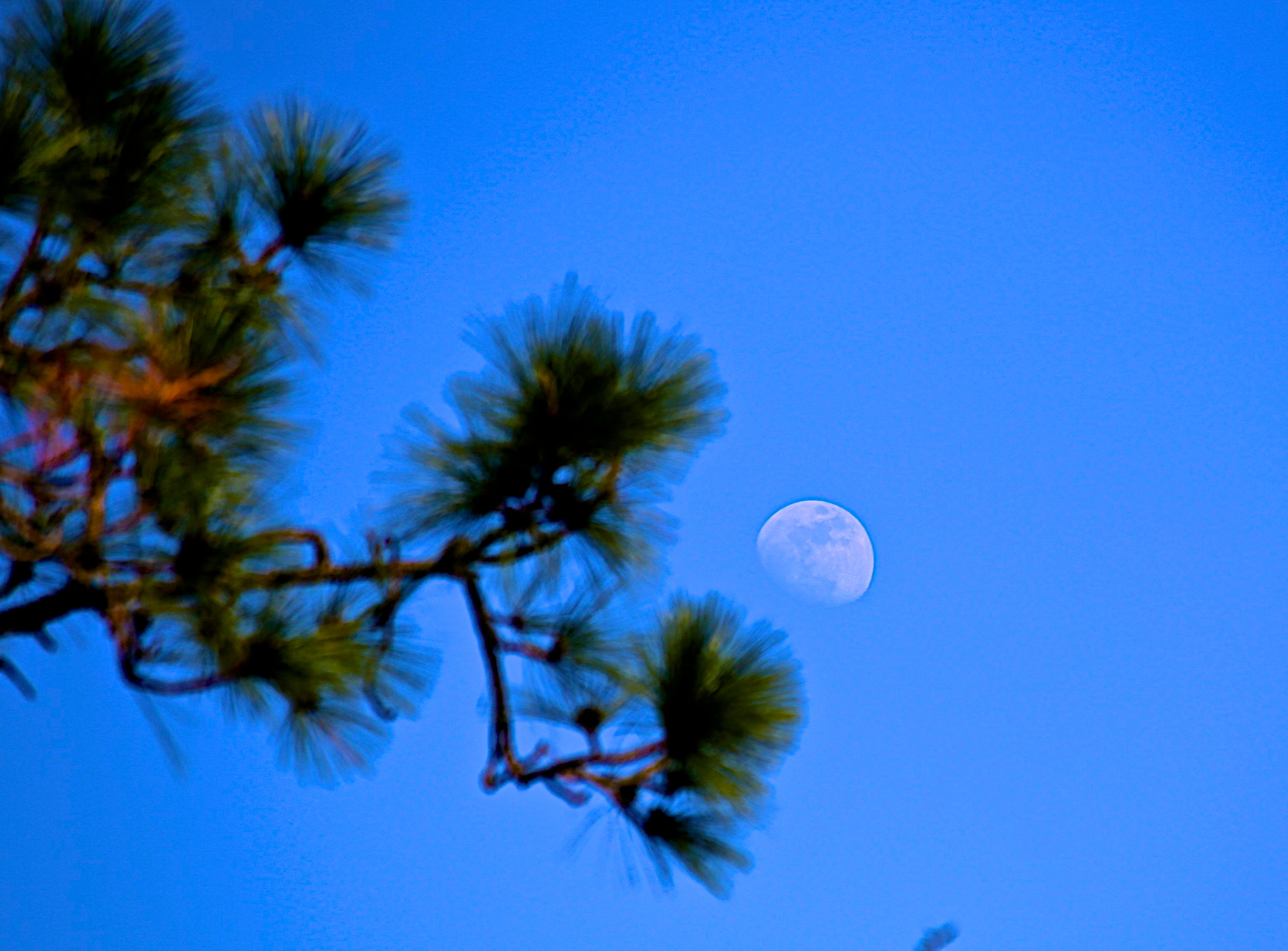 Photograph Moon in Pines by James Groce on 500px