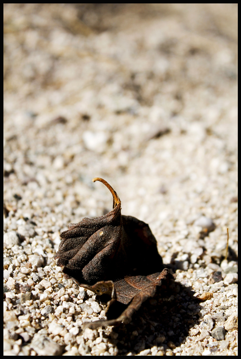 Photograph Leaf and Sand by Jeremiah  Policky on 500px