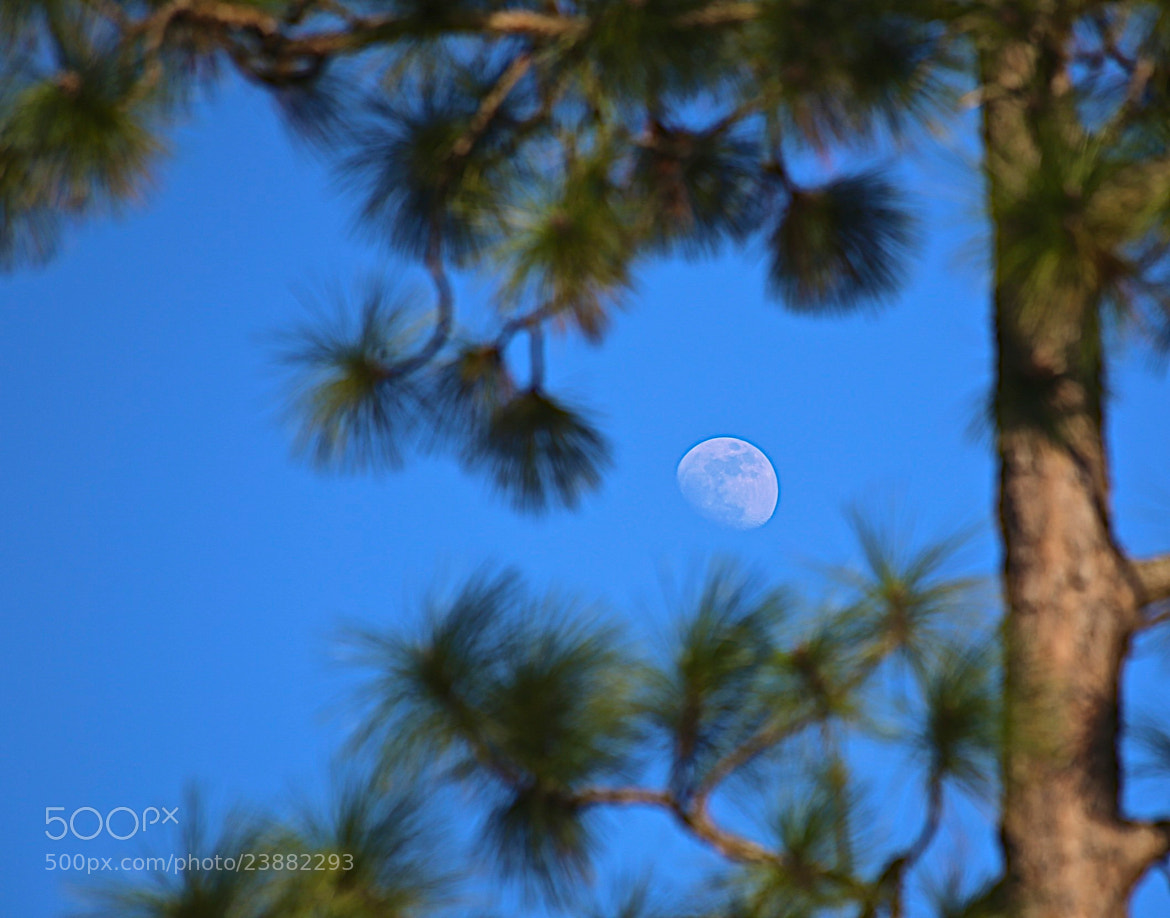 Photograph Tree & Moon by James Groce on 500px