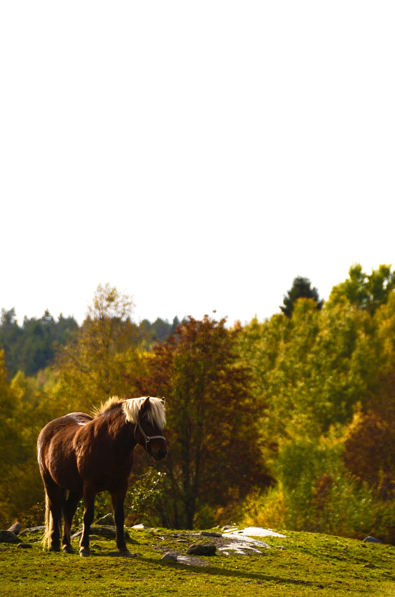 Photograph Horse in fall by Gunnar Sommerfeldt on 500px