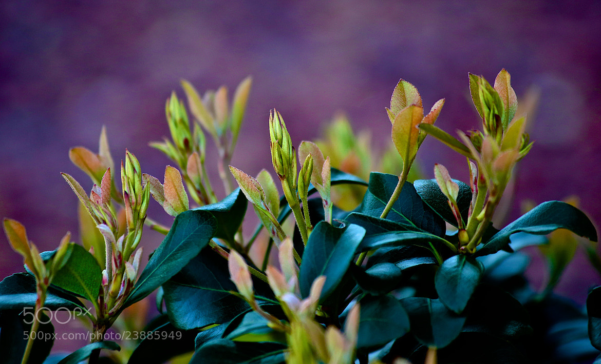 Photograph Boxwood by James Groce on 500px