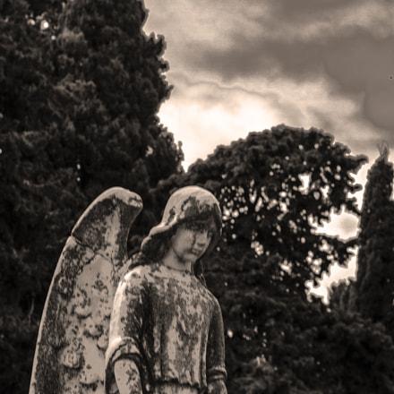 Cemetery Tarrega, Lleida