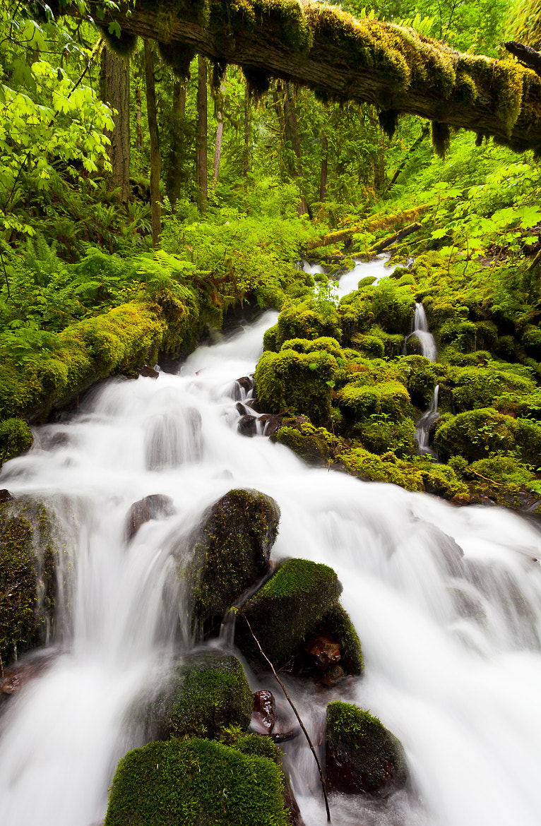 Photograph Greenery by Brian Pemberton on 500px