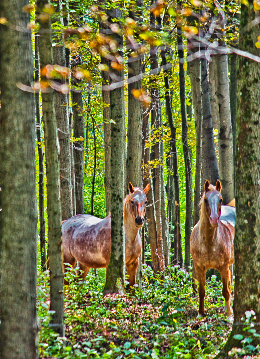 Photograph Horses in Woods by John Gross on 500px