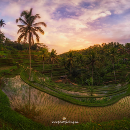 Bali sunset in Tengalaban rice fields