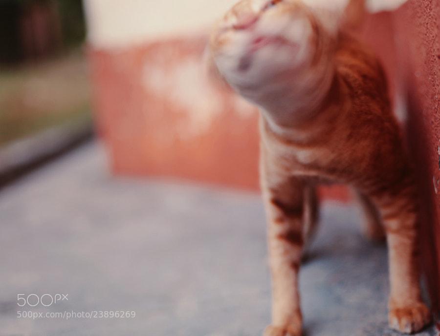 cat's motion by Nazrin Shah (NazrinShah)) on 500px.com