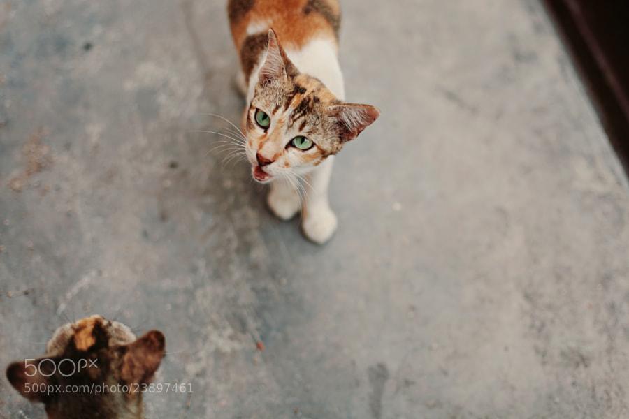 hungry cat by Nazrin Shah (NazrinShah)) on 500px.com