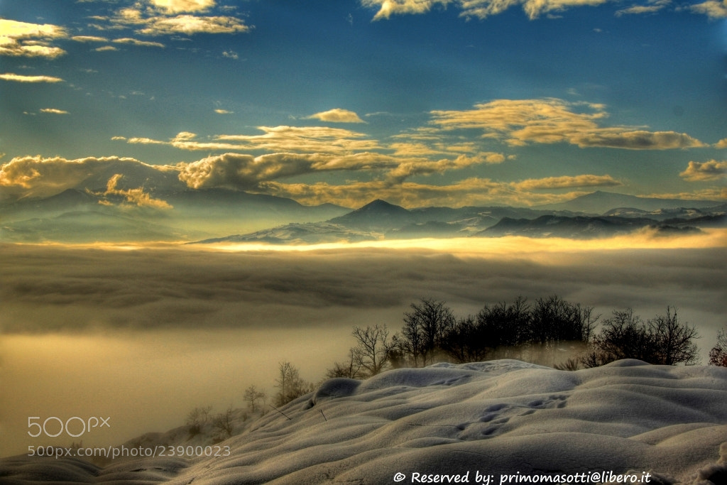 Photograph Rosola _7952_  dvd 15 by primo masotti on 500px