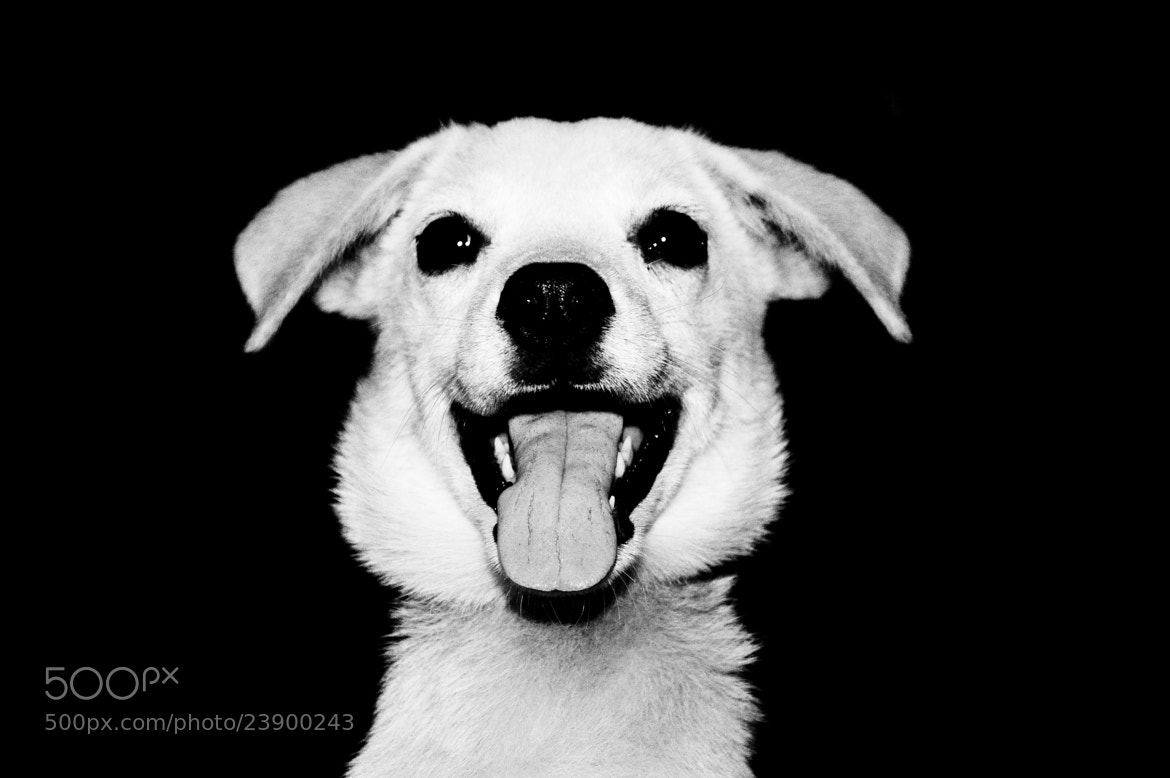 Photograph smile by sajan Laks on 500px