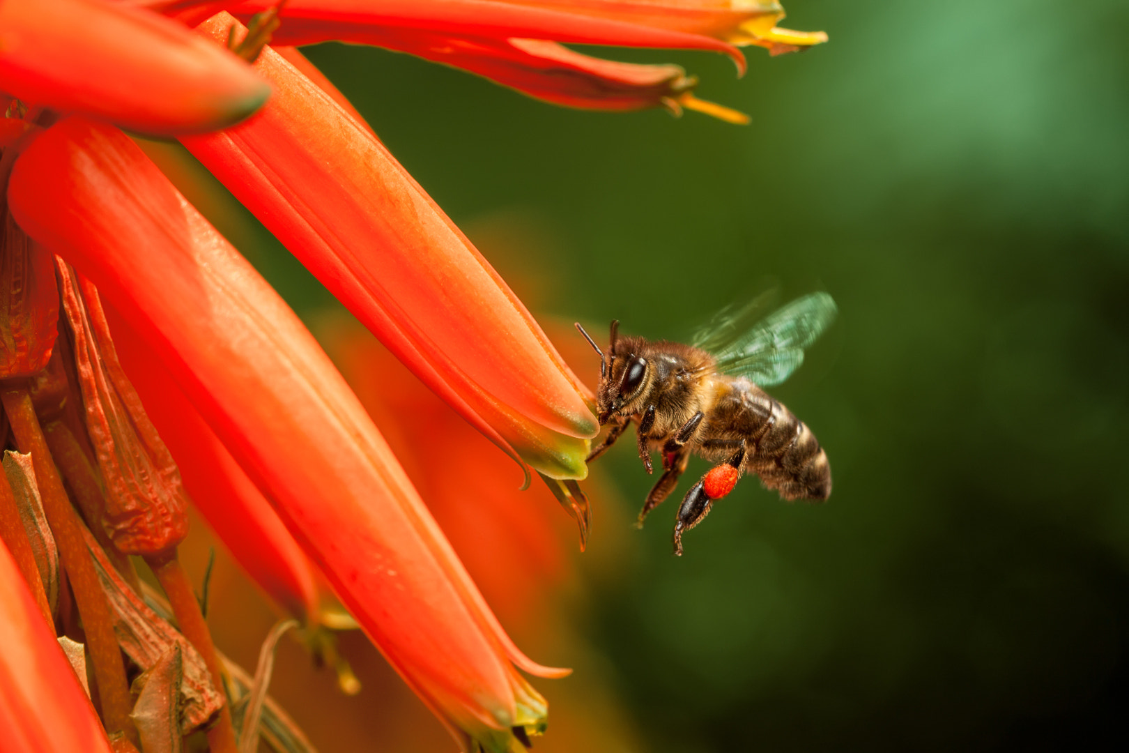 Photograph Im going to make red honey! by Andres Gutierrez on 500px