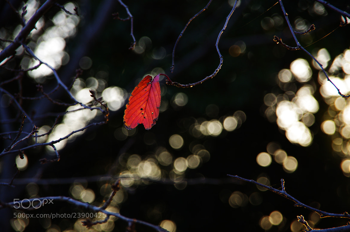 Photograph the last leaf by tomoki akiyama on 500px