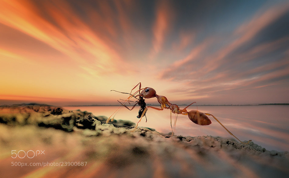 Photograph macroscape by sang pengembara on 500px