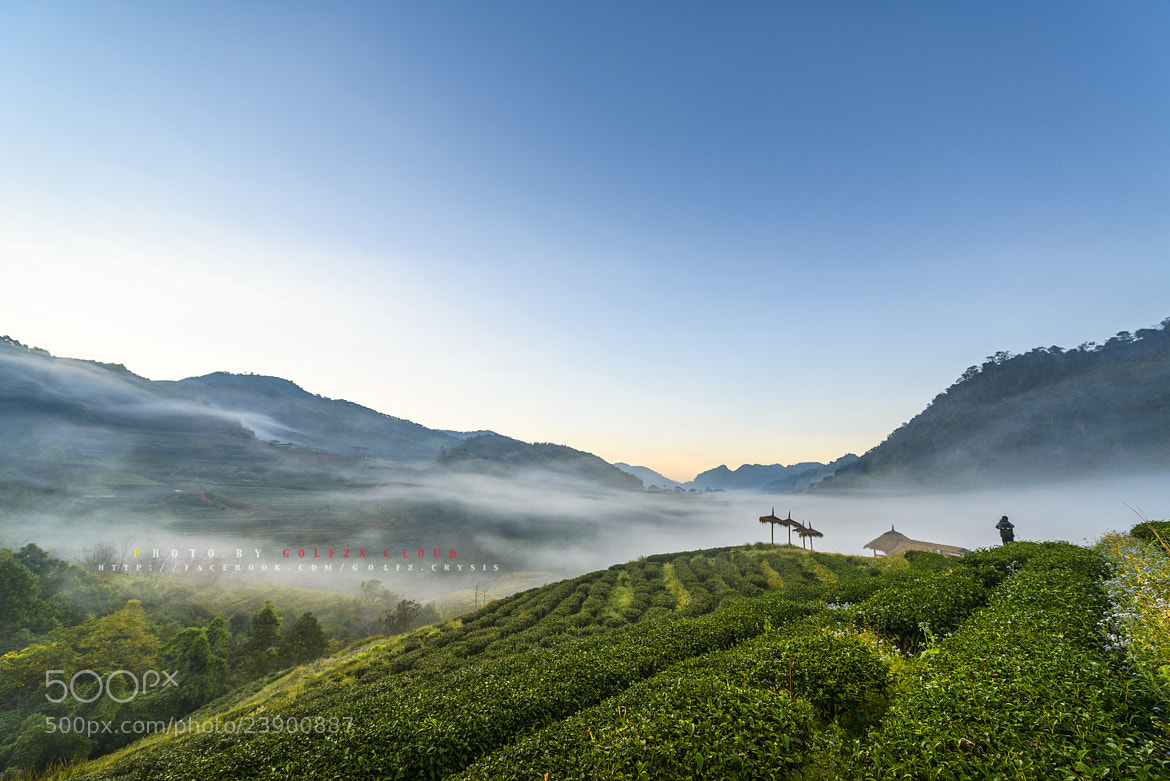 Photograph Morning tea plantations. by Golfzx Cloud on 500px