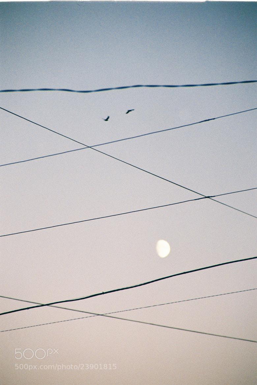 Photograph Untitled by Inna Tsyganova on 500px