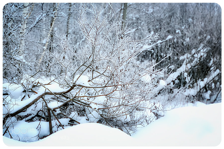 Photograph winter by Natalia Antipas on 500px