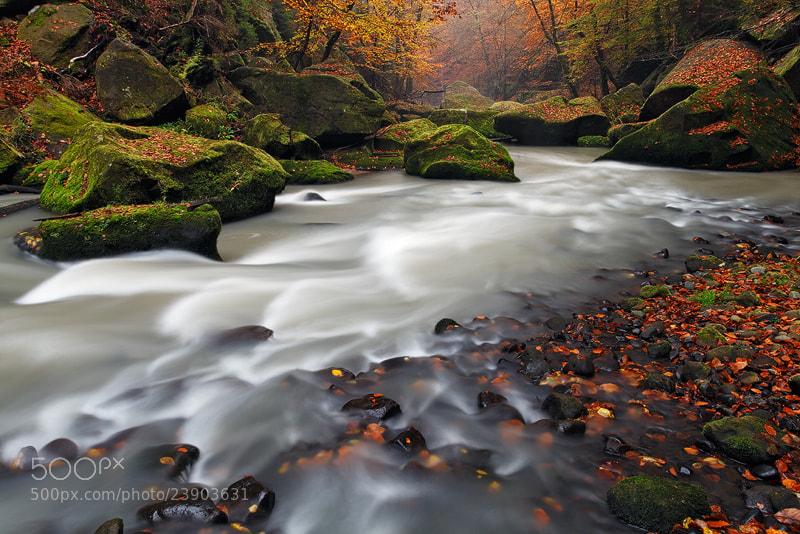 Photograph Fall Stream by Martin Rak on 500px