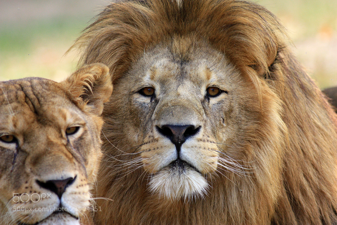 Photograph The King and The Queen by Fabrizio Carrubba on 500px
