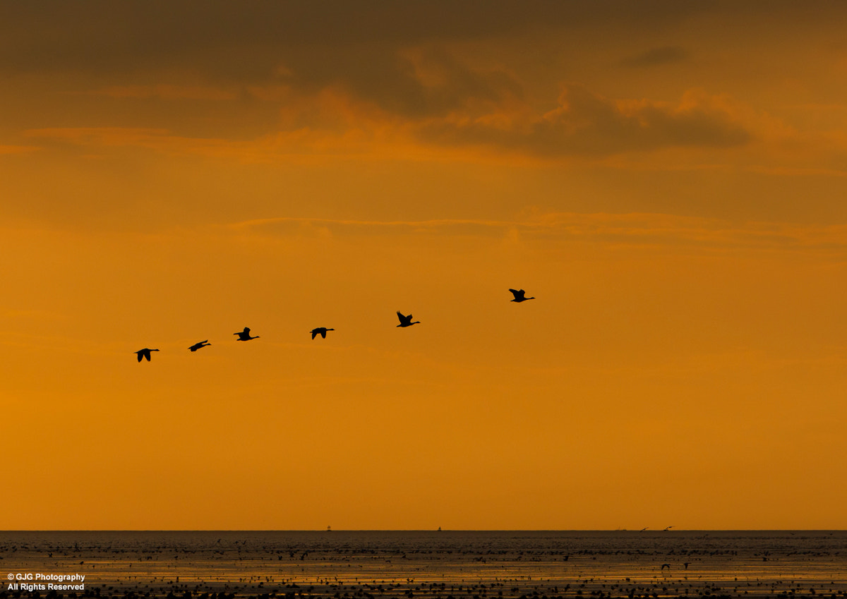 Photograph Flypast by Graham Goddard on 500px