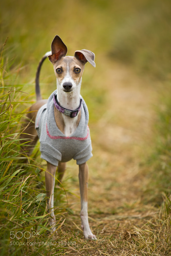 Ana enjoying a cool autumn afternoon at the dog park in her recreation clothes.