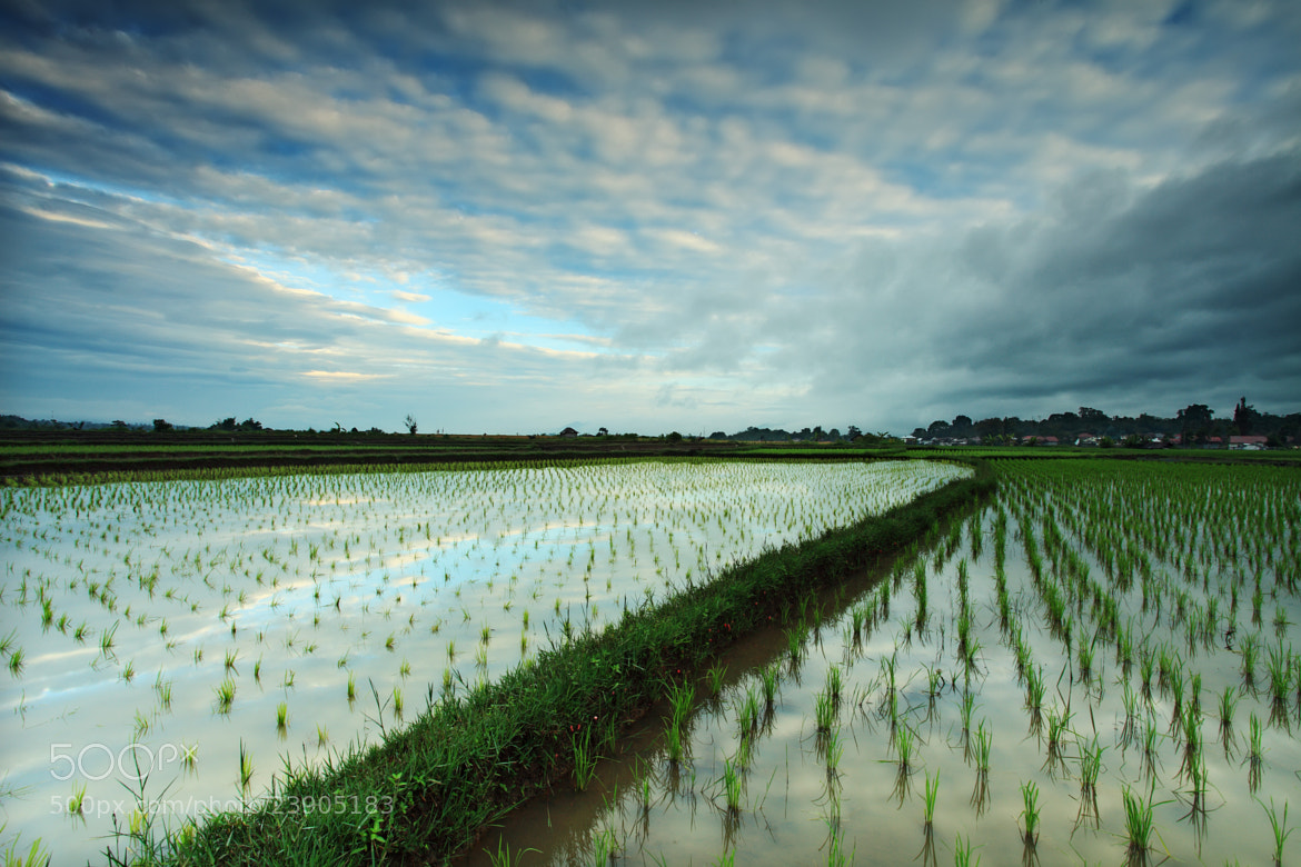 Photograph Rice Field by Rollando  Roeslan on 500px