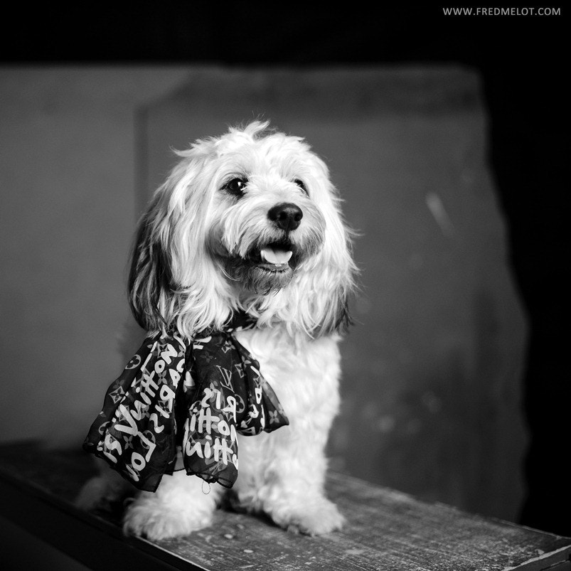 Photograph Loulou by Fred Melot on 500px