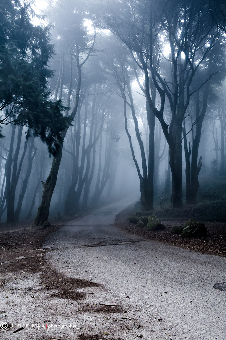 Photograph The last road by Jorge Maia on 500px
