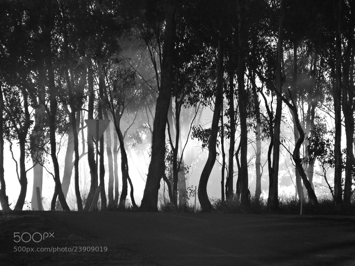 Photograph Foggy Sunrise by GS Imagery on 500px
