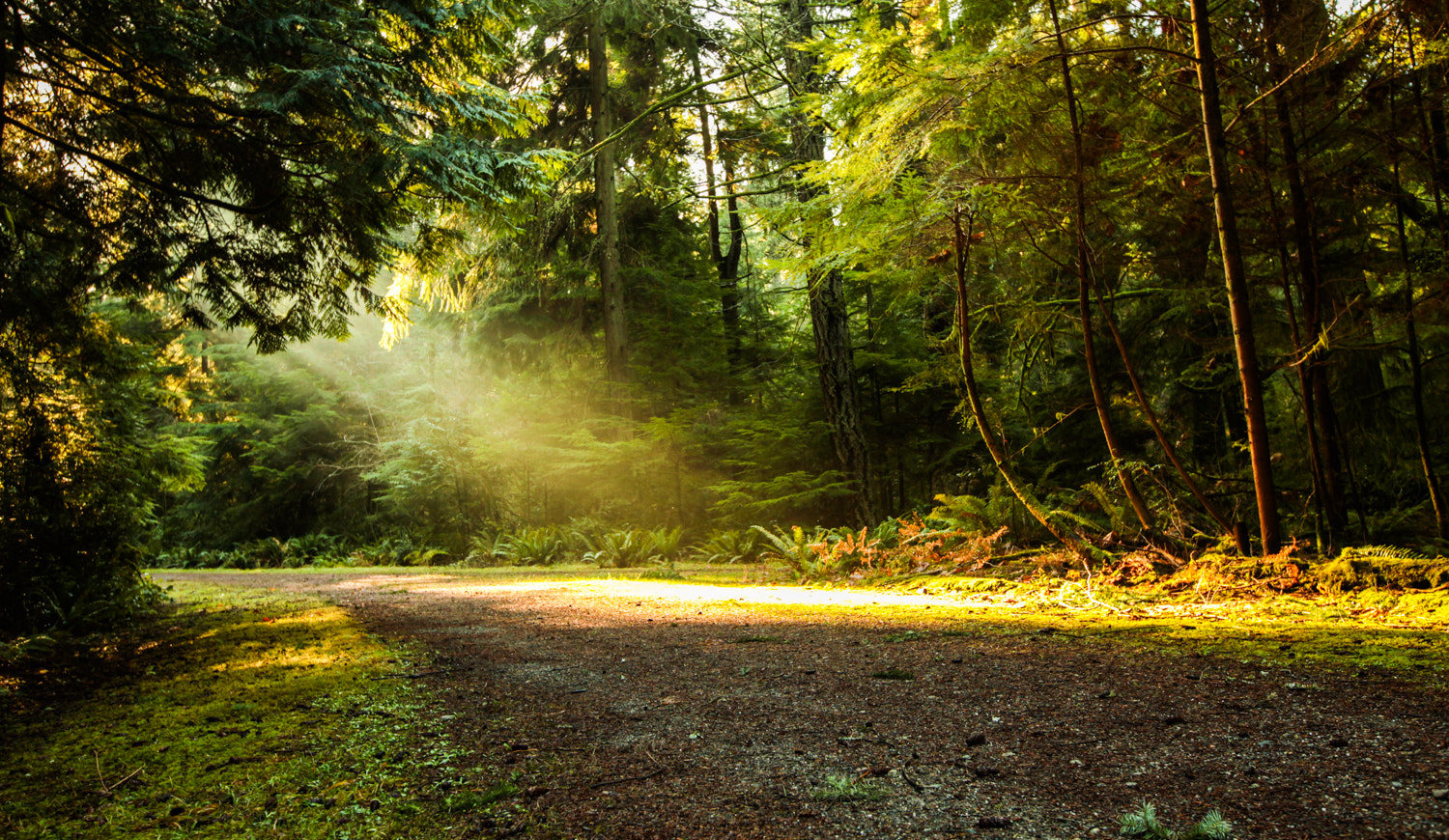 Photograph Point Defiance | Heavenly Light by Gabriel Ng on 500px