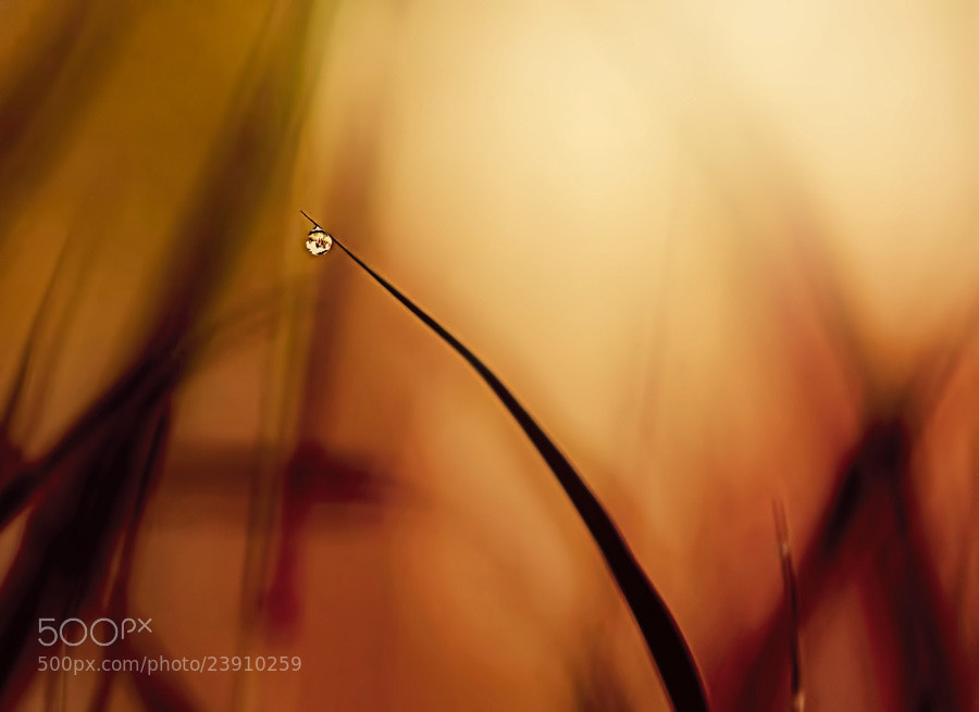 Photograph Just a drop by Sirinat Tanamai on 500px