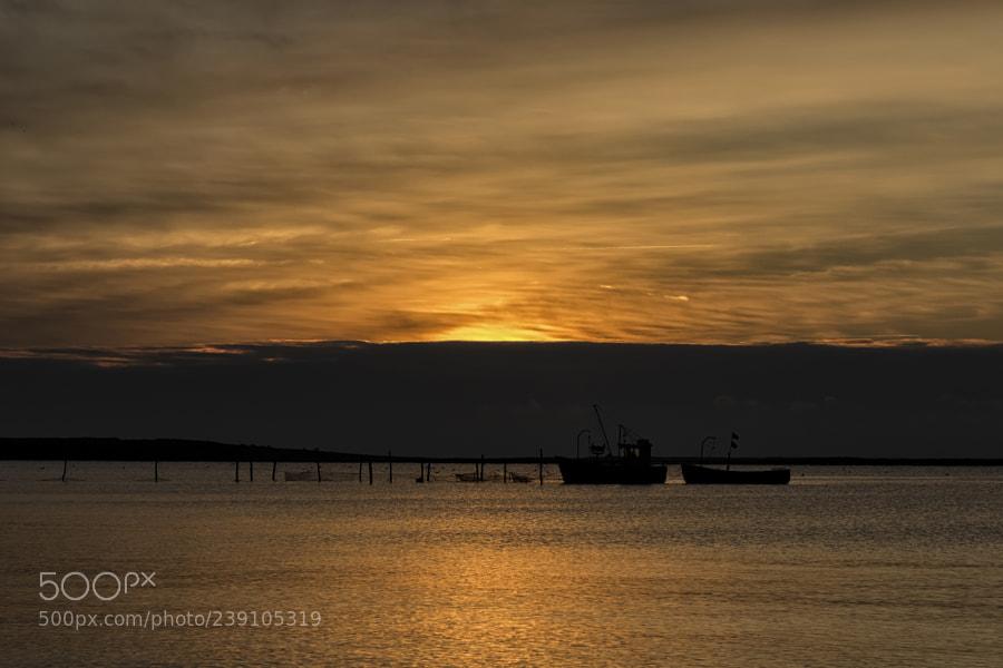 Fishing in the morning light