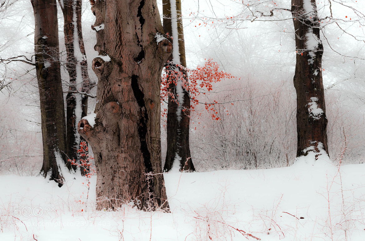 Photograph Winter Forest by Pawel Niktos on 500px