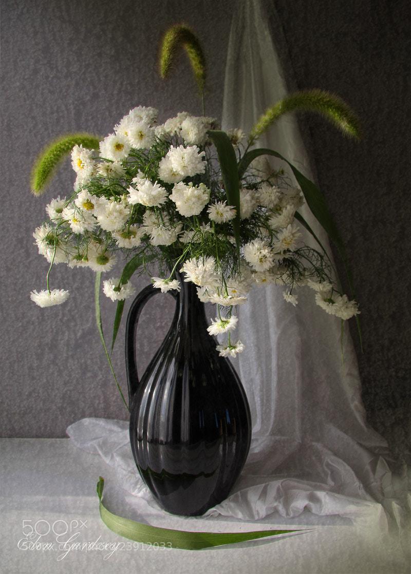 Photograph A simple bouquet. by Elen Gardzey on 500px