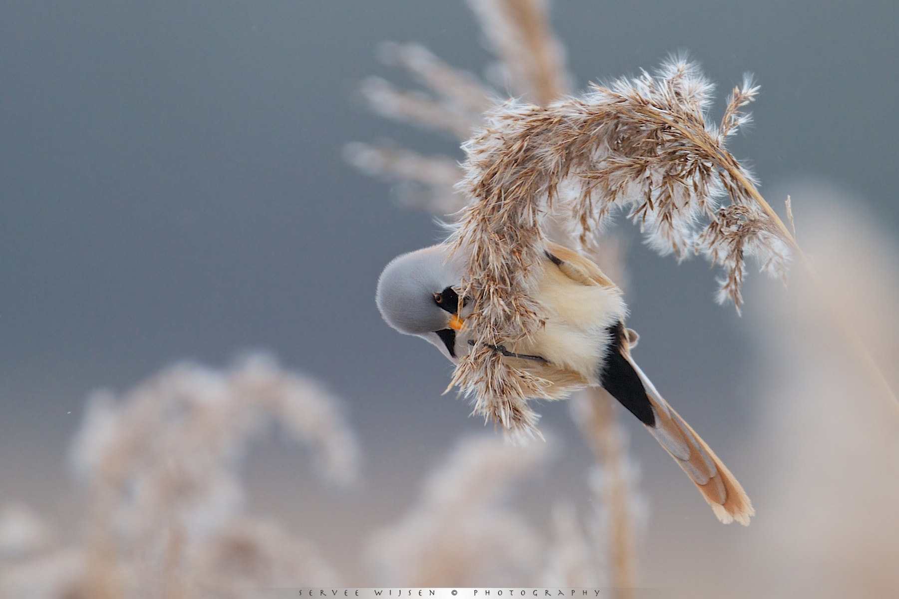 Photograph Hangin' On... by Servee Wijsen on 500px
