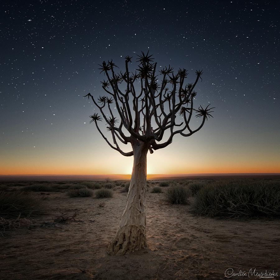 Stars & Tree by Carsten Meyerdierks