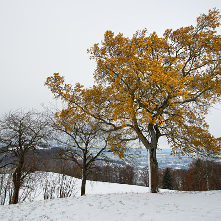 autumn meets winter