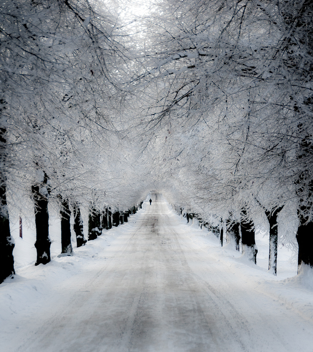 Photograph A Winter Scene by Hector Melo A. on 500px
