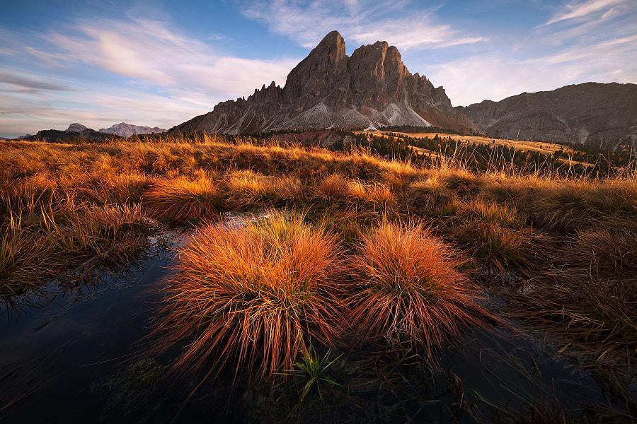Alpine swamp by Daniel Řeřicha