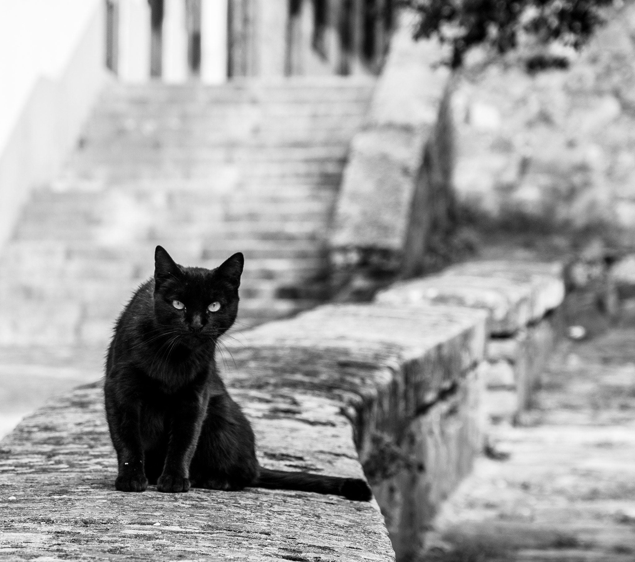 Photograph Black Cat by Miguel Aparicio on 500px